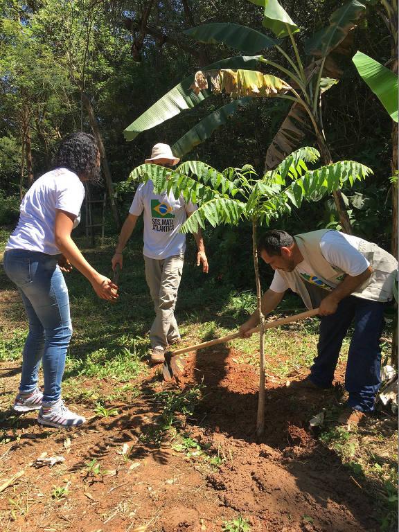 Até agora, mais de 45 mil mudas já foram plantadas pelo projeto Geração+Verde