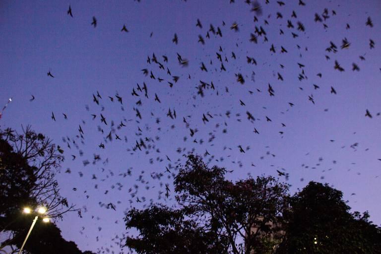 Centenas de pontos pretos em um céu cintilante