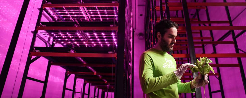 O empresário Rafael de la Libera, 30, em sua fazenda urbana, a Pink Farms, na zona oeste de São Paulo