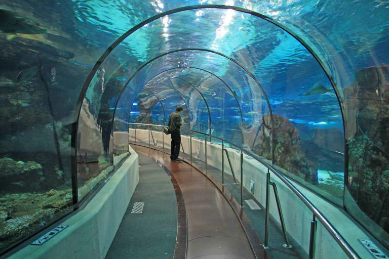 Esteira rolante no aquário de Barcelona