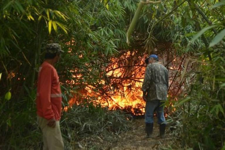Espaços onde o bambu morreu recentemente são mais vulneráveis a incêndios florestais