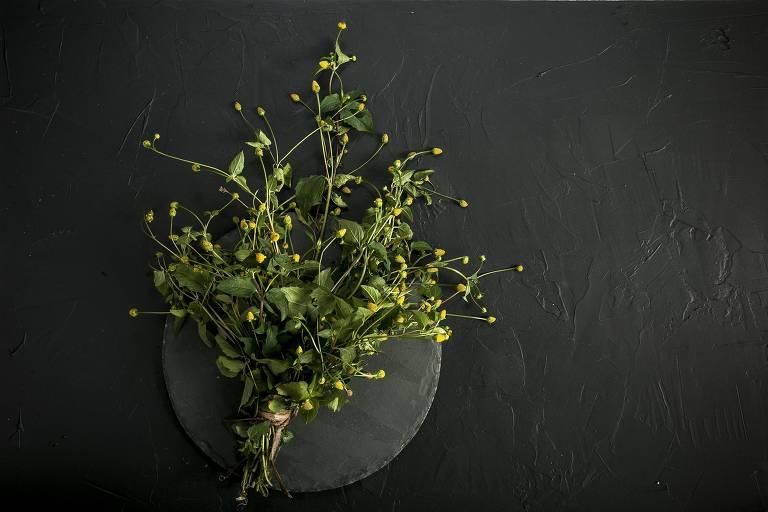 Jambu, que tem caule, folhas e flores com propriedades anestésticas