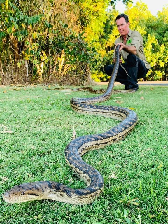 Teto de casa desaba com o peso de duas cobras gigantescas acasalando