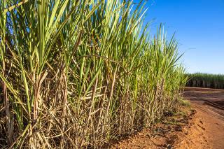 Plantação de cana-de-açúcar no município de Borá, em São Paulo