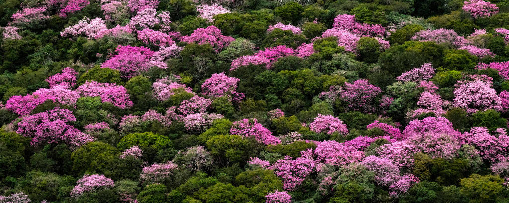 Copas de árvores verdes e rosas