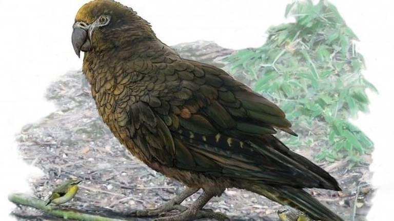 Paleontologistas encontraram fósseis de papagaio gigante na Nova Zelândia