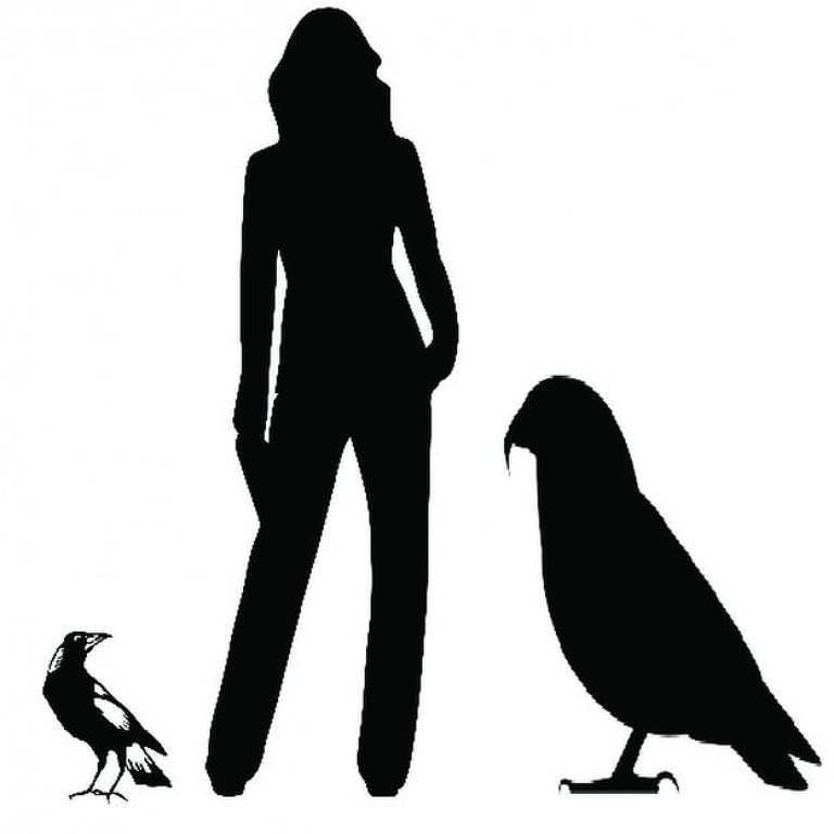 O papagaio gigante, batizado de Hércules, tinha quase metade da altura média de um brasileiro