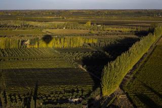 Videiras e oliveiras de Junín, região a cerca de 50 km de Mendoza, na Argentina
