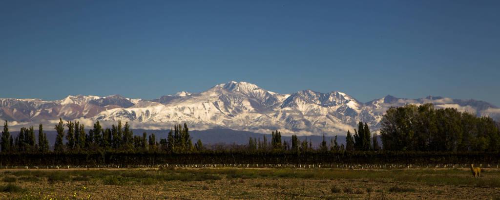 Videiras da vinícola Sophenia, no Valle de Uco, em Mendoza; ao fundo, os Andes