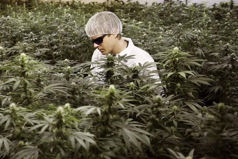 Ryan Douglas: master grower de sucesso Foto:Ryan Douglas/ arquivo pessoal