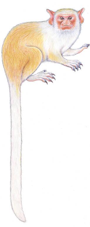 Desenho de macaco branco e dourado