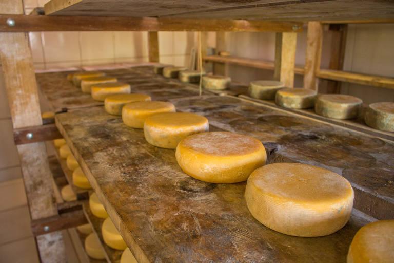 Produção do queijo Bicas da Serra, na fazenda Santo Antônio de Categeró, em Carrancas (MG)