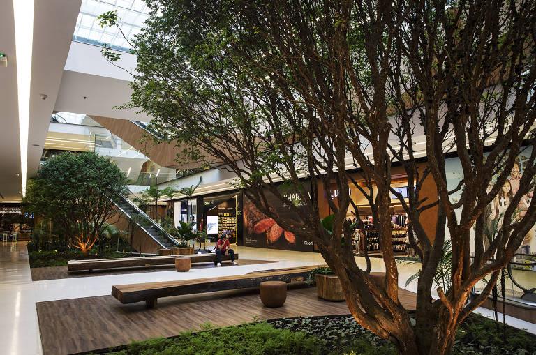 Jabuticabeira do jardim interno do Shopping Parque da Cidade, na zona sul
