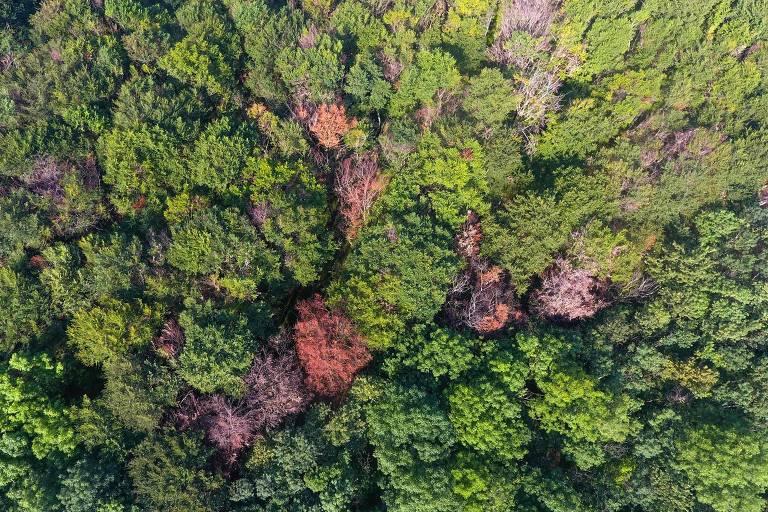 Vista aérea da de floresta de Warburg, na Alemanha