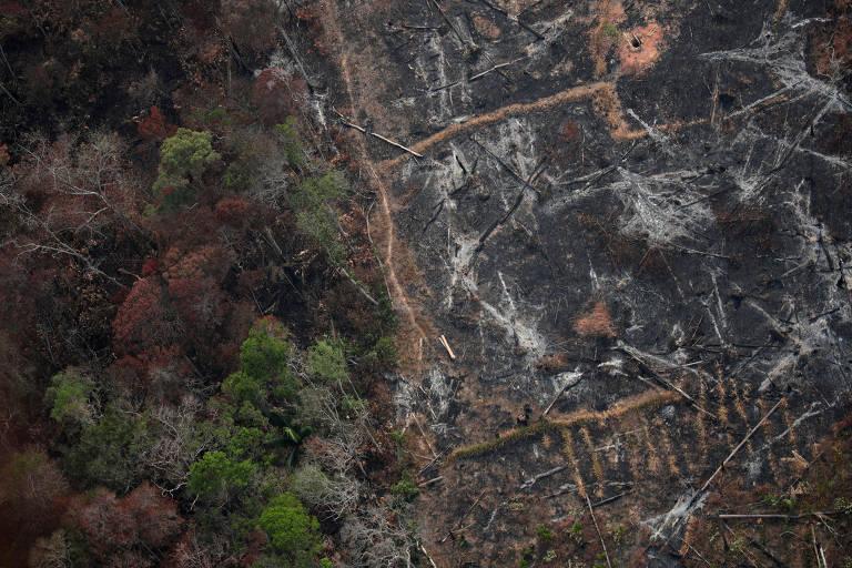 O estado campeão de focos de incêndio é o Mato Grosso, com 13.682 ocorrências, praticamente um quinto dos registros do país, aumento de 87% em relação a 2018