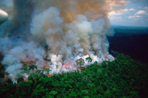Imagens compartilhadas por famosos sobre Amazônia são antigas ou de outros lugares