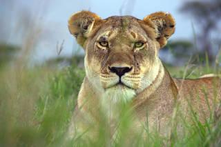 Serengeti: Episode 1: Destiny