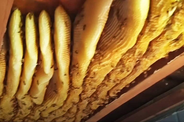 Colmeia gigante é achada em casa na Austrália
