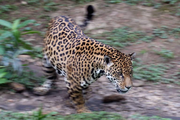 Zoo de São Paulo tem lixeira quebrada e lugar interditado