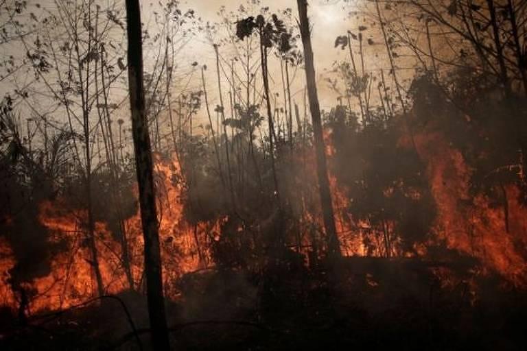 Região amazônica não possui a mesma capacidade de lidar com o fogo do que o Cerrado
