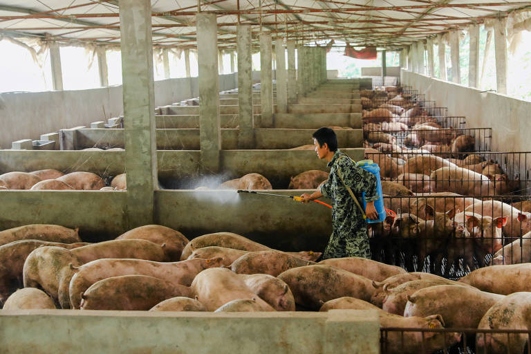 Homem desinfeta fazenda de porcos em Guangan, privíncia de Sichuan, na China