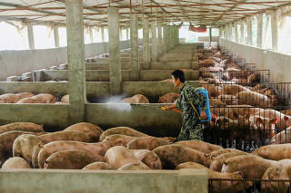Man disinfects a pig farm in Guangan, Sichuan