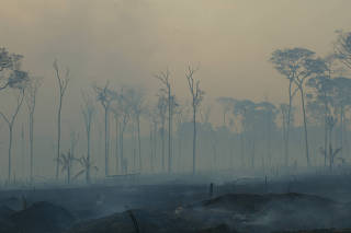 INCENDIO NA AMAZONIA