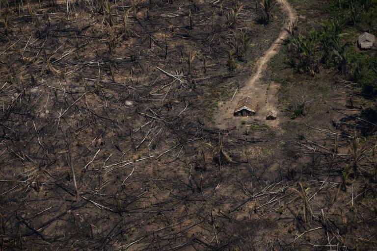 Área desmatada por grileiro dentro da Terra Indígena Trincheira Bacajá, no Pará
