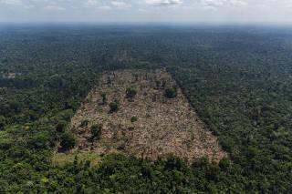 Área desmatada por grileiros na Terra Indígena Trincheira Bacajá, no Pará