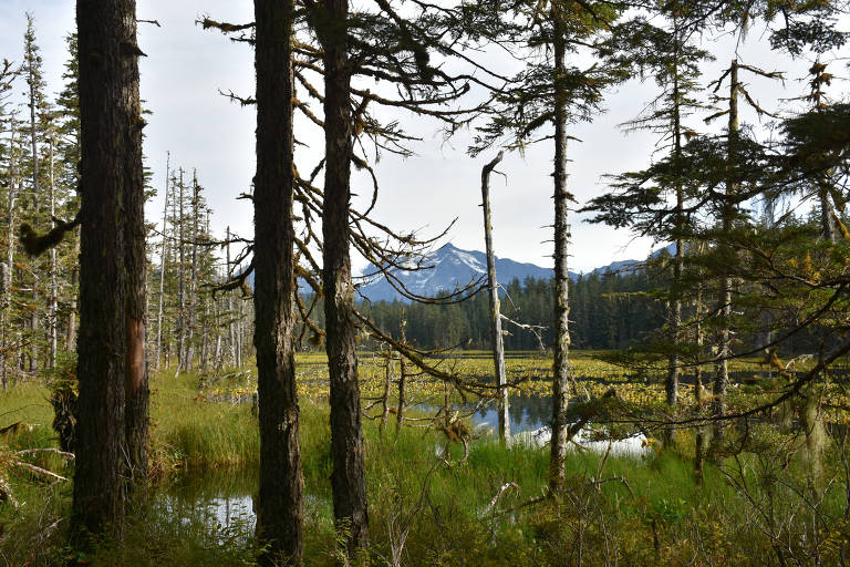 A view from the Situk Lake Trail in Yakutat, Alaska, of the Tongass National Forest. MUST CREDIT: Photo courtesy of Paul A. Robbins of the Forest Service