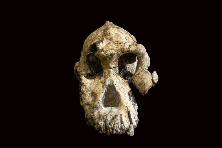 O crânio de Australopithecus anamensis, de 3,8 milhões de anos