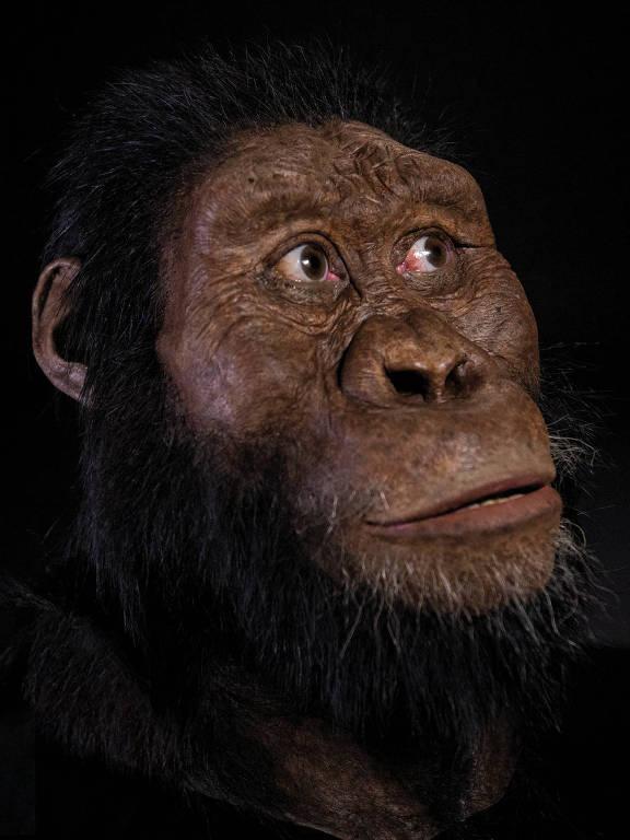 A reconstrução facial do crânio do Australopithecus anamensis