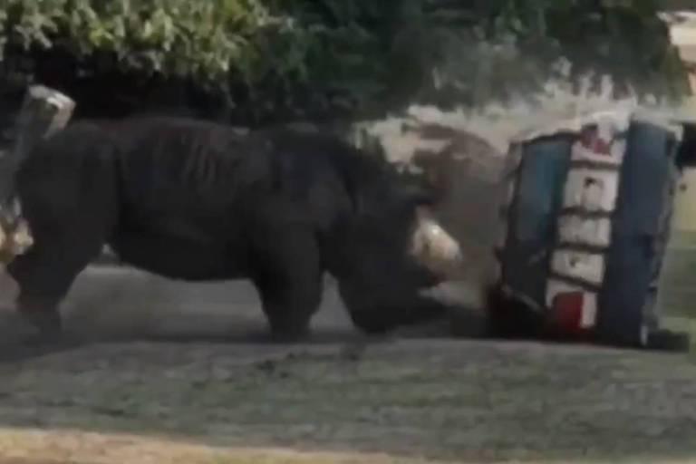 Rinoceronte destrói carro com funcionário de safári dentro