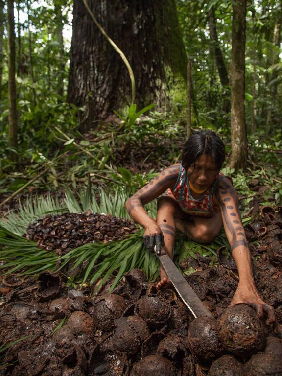 Índia Nhakrã no castanhal da Terra Indígena Kayapó,  no Pará