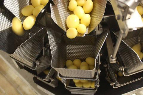 Pesagem automática de batatas na empresa Vapza, em Castro (PR)