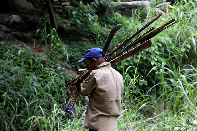 Venezuelanos derrubam árvores para obter lenha para cozinhar