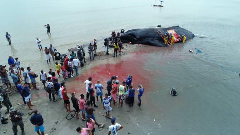 Baleia morre encalhada em Salvador