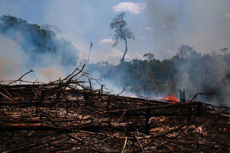 Incêndios na região metropolitana de Manaus
