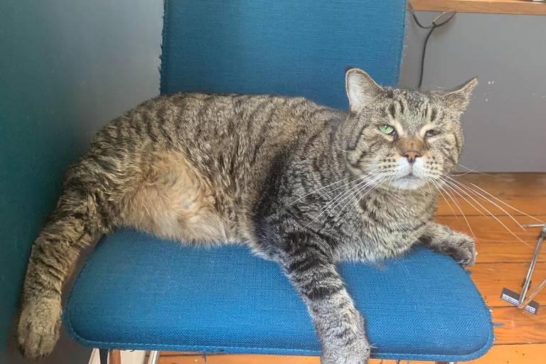 ONG faz campanha, e gatão de 12 kg recebe 3.000 pedidos de adoção