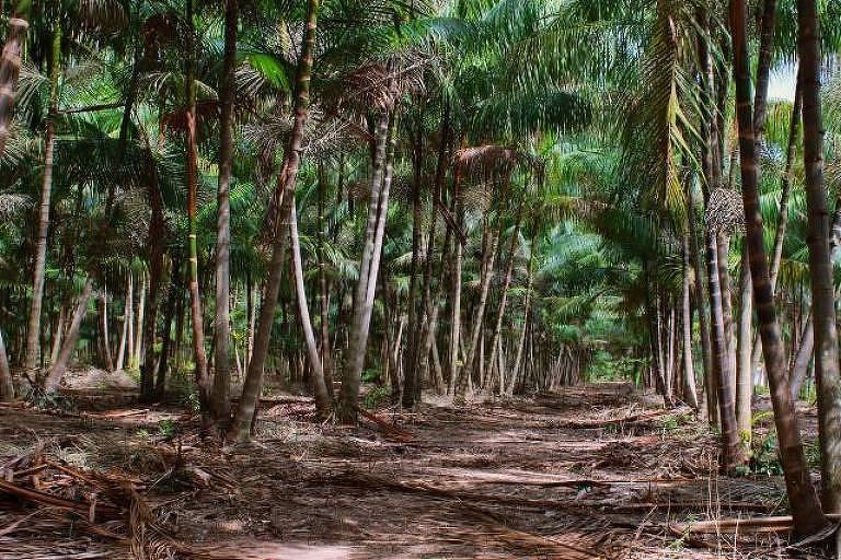 Projetos dependem da floresta em pé para gerar lucro na Amazônia