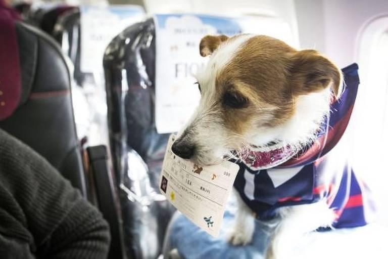 Cães de apoio emocional são permitidos pela maioria das companhias áreas do Brasil