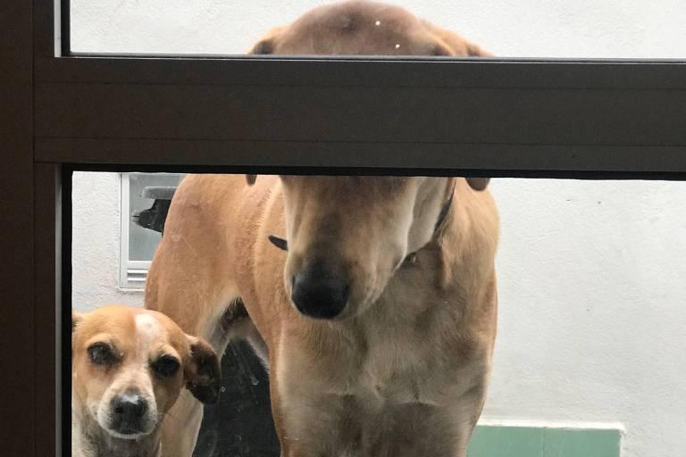 Paola Carosella põe cães de castigo