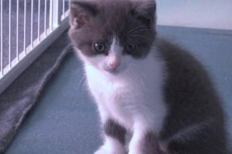 O gato que ganhou 'mais uma vida' graças à clonagem na China