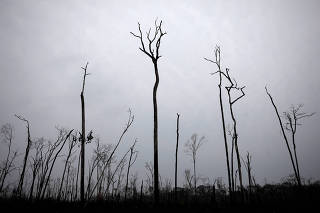 Burned trees are seen on a tract of Amazon jungle in Apui