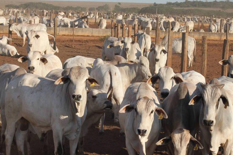 Confinamento em criação de gado em Brasnorte (MT)
