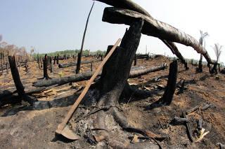 Área desmatada e queimada na parte rural de Humaitá, no sul do Amazonas