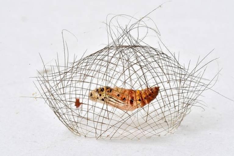 O casulo de fios, por Minghui Yuan, da China