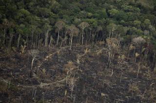 Terreno desmatado e queimado é visto na floresta Amazônia