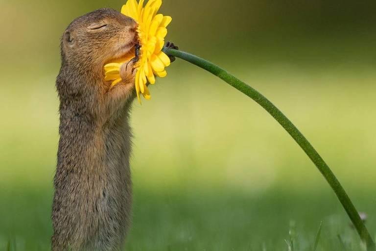 Imagem feita pelo fotógrafo Dick van Duijn de esquilo cheirando flor