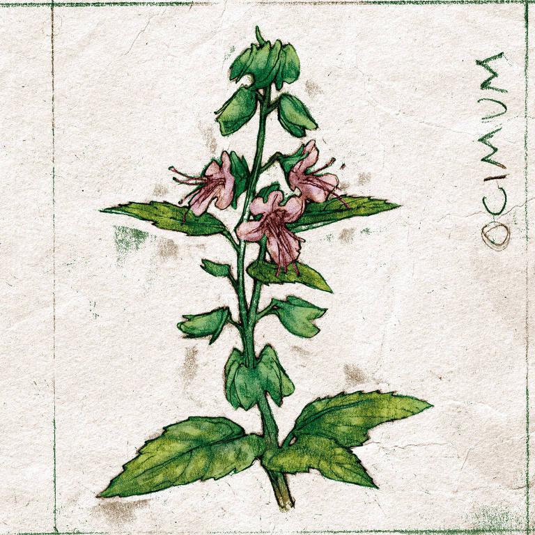 Ilustração sobre planta medicinal